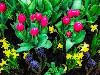 Photograph - Spring Garden by Cornelia DeDona