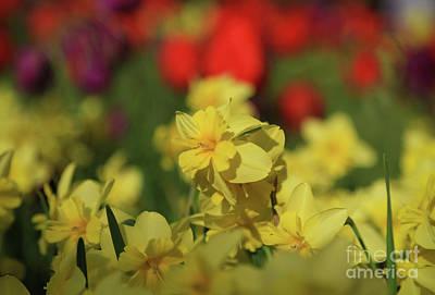 Photograph - Spring Garden Kaleidoscope by Rachel Cohen