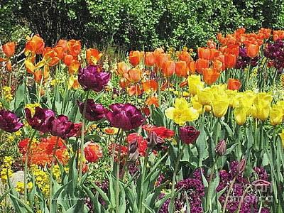 Photograph - Spring Garden by Kathie Chicoine