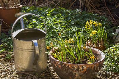 Photograph - Spring Garden by Patricia Hofmeester