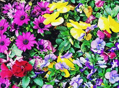 Photograph - Spring Garden by Sarah Loft
