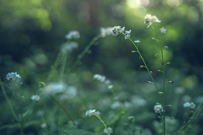 Photograph - Spring Garden Scene #1 by Gene Garnace
