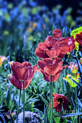 Photograph - Spring Garden by Susan Warren