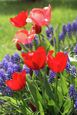 Photograph - Spring Garden by Trina Ansel