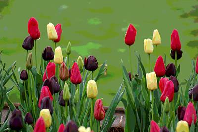 Spring Bulbs Digital Art - Spring Garden View II by Suzanne Gaff