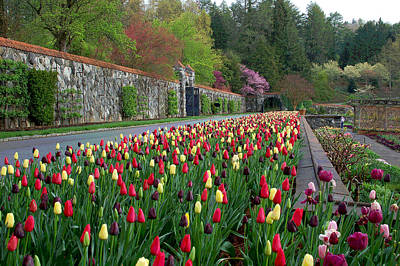 Asheville Digital Art - Spring Garden View IIi by Suzanne Gaff