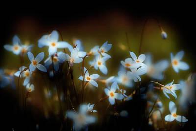 Photograph - Spring Gathering by Mike Eingle