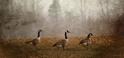 Photograph - Spring Geese by WB Johnston