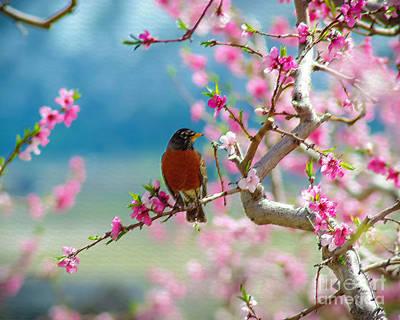 Birds Photograph - Spring by Gloria Pasko