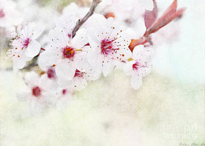 Photograph - Spring Glory 1 by Debbie Portwood