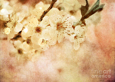 Photograph - Spring Glory 2 by Debbie Portwood