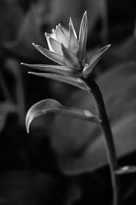 Photograph - Spring Glow by Glenn DiPaola
