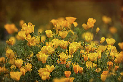 Photograph - Spring Gold  by Saija Lehtonen