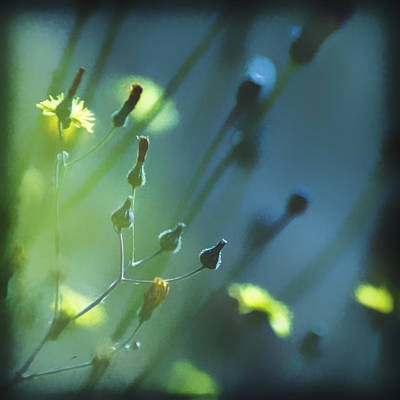 Art Print featuring the photograph Spring Grass by Yulia Kazansky