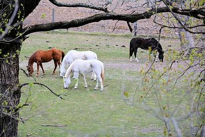 Photograph - Spring Grazing by Bonfire Photography
