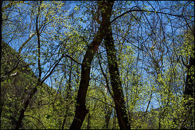 Photograph - Spring Green 2 by Bonnie Follett
