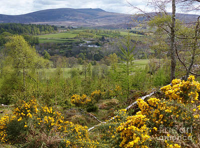 Photograph - Spring Green - Ballindalloch by Phil Banks
