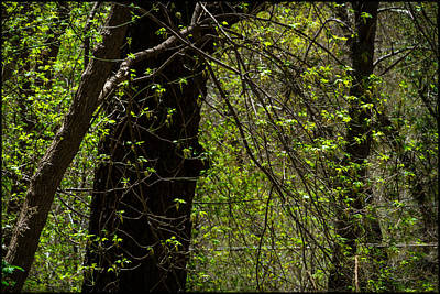 Photograph - Spring Green by Bonnie Follett