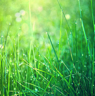 Spring Green Grass Art Print by Dirk Wüstenhagen Imagery
