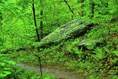 Photograph - Spring Green In West Virginia by Raymond Salani III