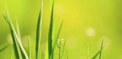 Photograph - Spring Green by Joni Eskridge