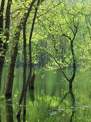 Photograph - Spring Green  by Lori Frisch