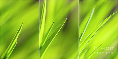 Royalty-Free and Rights-Managed Images - Spring Green by Veikko Suikkanen