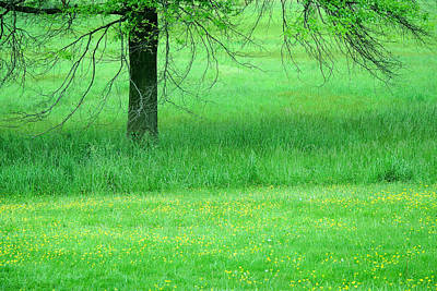 Photograph - Spring Green With Yellow Buttercups by Cora Wandel