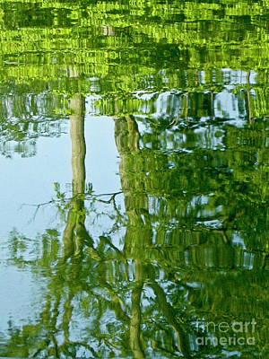 Photograph - Spring Greenery Reflections by Carol F Austin