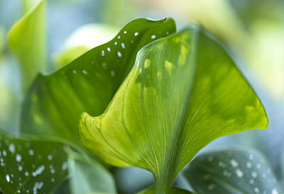 Photograph - Spring Greens by Susan Stone