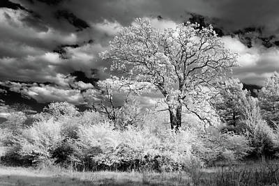 Photograph - Spring Growth In Black And White by James Barber