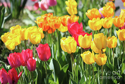 Photograph - Spring Happiness by Carol Groenen