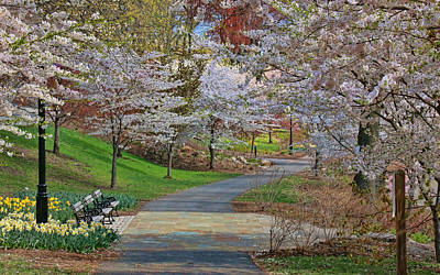 Photograph - Cherry Blossom Trees Of Branch Brook Park 14 by Allen Beatty