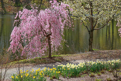 Photograph - Cherry Blossom Trees Of Branch Brook Park 15 by Allen Beatty