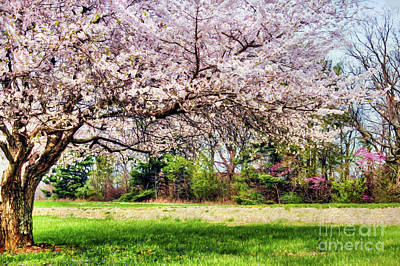 Asian Landscape Photograph - Spring Has Sprung by Darren Fisher