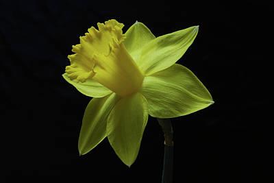 Spring Has Sprung. Original by Terence Davis