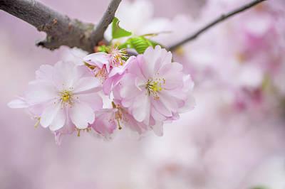 Photograph - Spring Hello by Jenny Rainbow