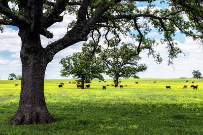 Photograph - Spring Herd by James Barber