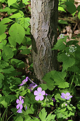 Photograph - Spring Hiking Trail 5 052318 by Mary Bedy