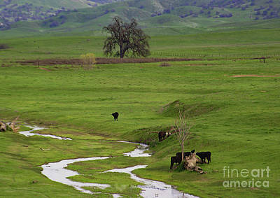 Photograph - Spring Hills by Debby Pueschel