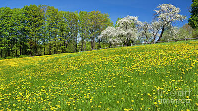 Photograph - Spring Hillside Landscape by Alan L Graham