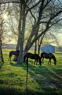 Photograph - Spring Horses 2 by Bonfire Photography