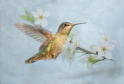 Photograph - Spring Hummingbird by Angie Vogel
