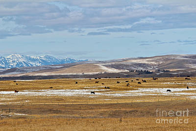 Photograph - Spring In Alberta by Ann E Robson