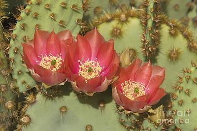 Photograph - Spring In Arizona by Sandra Bronstein