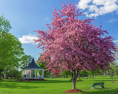 Photograph - Spring In Bandstand Park by Tim Kirchoff