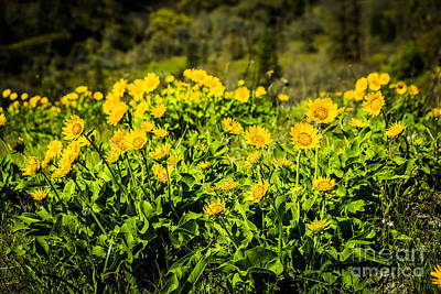 Photograph - Spring In Bloom by Patricia Babbitt