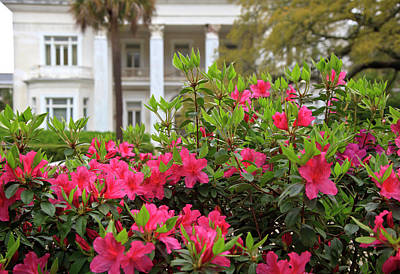 Photograph - Spring In Charleston by Jill Lang