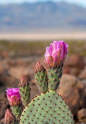 Photograph - Spring In Death Valley by Dana Sohr