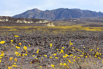 Spring In Death Valley Art Print by Dung Ma